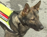 Zollhund Lennox