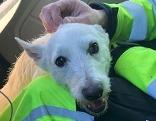 Hund A21 Rettung Asfinag