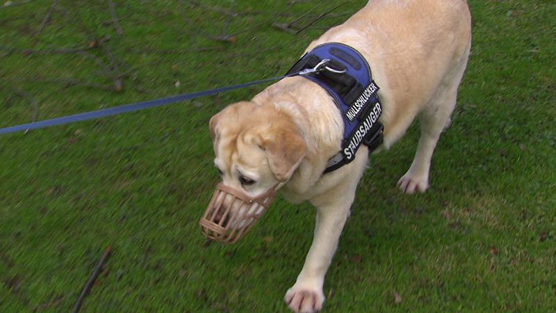 Gefahr für Haustiere: Pestizide im Garten