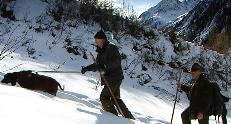 Jagd Pitztal Steinböcke