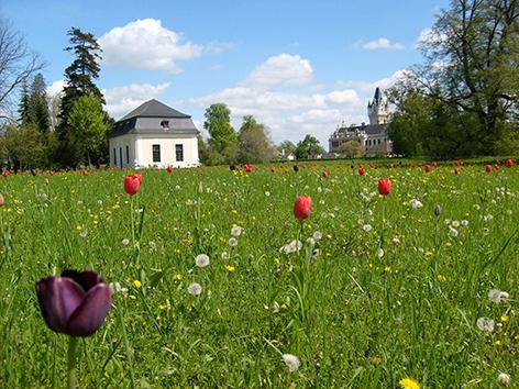 Tulpen Gartenpavillon Grafenegg