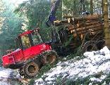 Waldschäden Henndorf