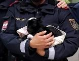 Polizisten mit einem Ziegenbaby im Arm