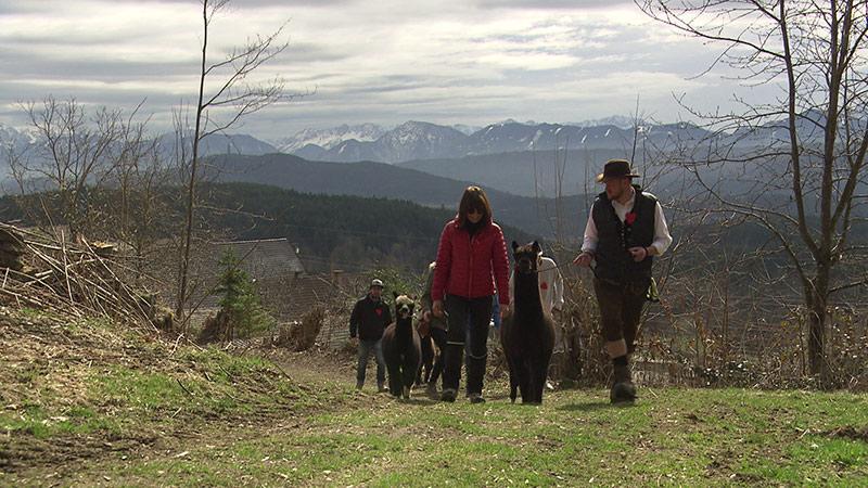 Alpaka Dating Wanderung Techeslberg Wohlgemuth