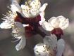 24.03.19 Marillenblüte Wachau Wochenende Touristen