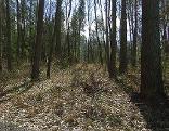 trockenes Feld, Wald