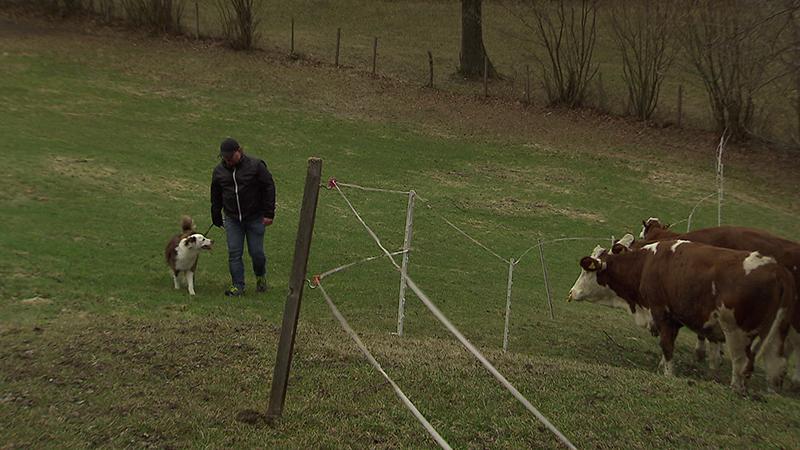01.03.19 Richtiges Verhalten bei Rinderherden Alm Wanderung Kuhattacke Tirol