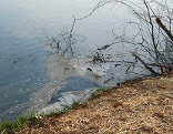 Fäkalien in der Donau