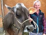 Schönste Kuh Österreichs Ireen mit ihrem Besitzer Josef Nessler aus Innerbraz.