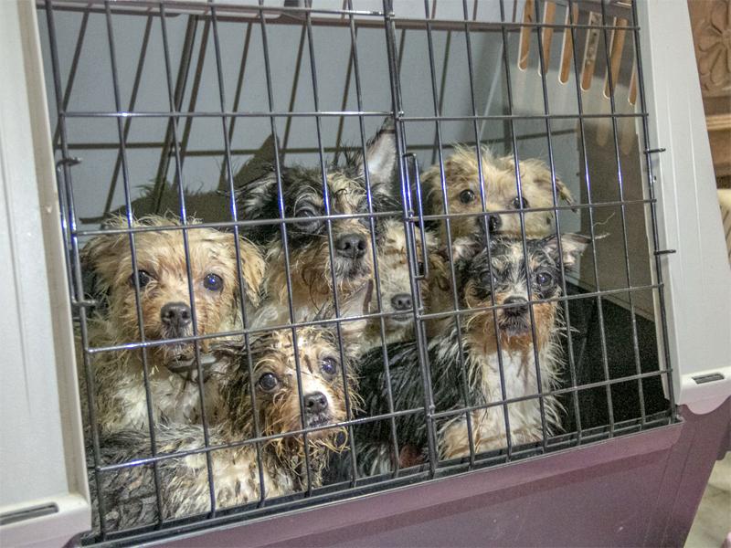 68 verwahrloste Hunde