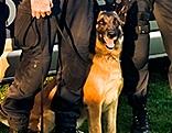 """Polizeihund """"Apollo"""""""