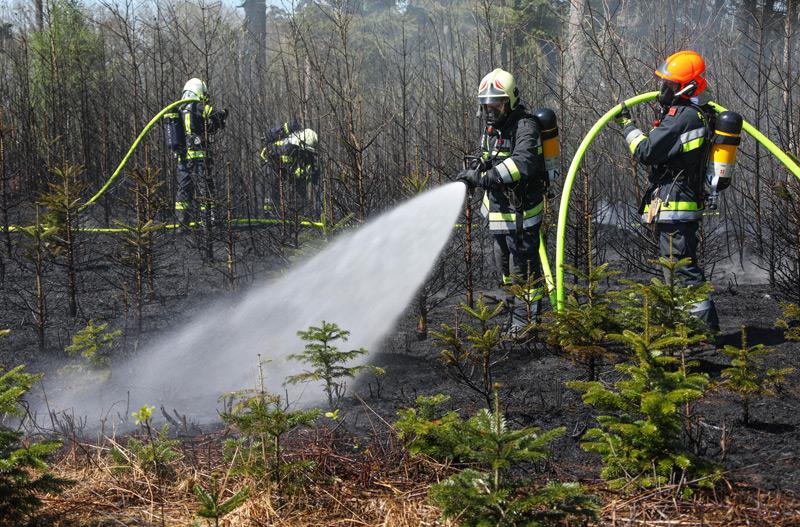 Feuerwehrleute beim Löschen brennender junger Christbäume