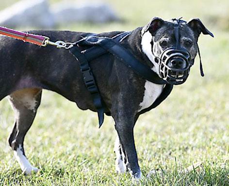 Hund mit Maulkorb und Leine