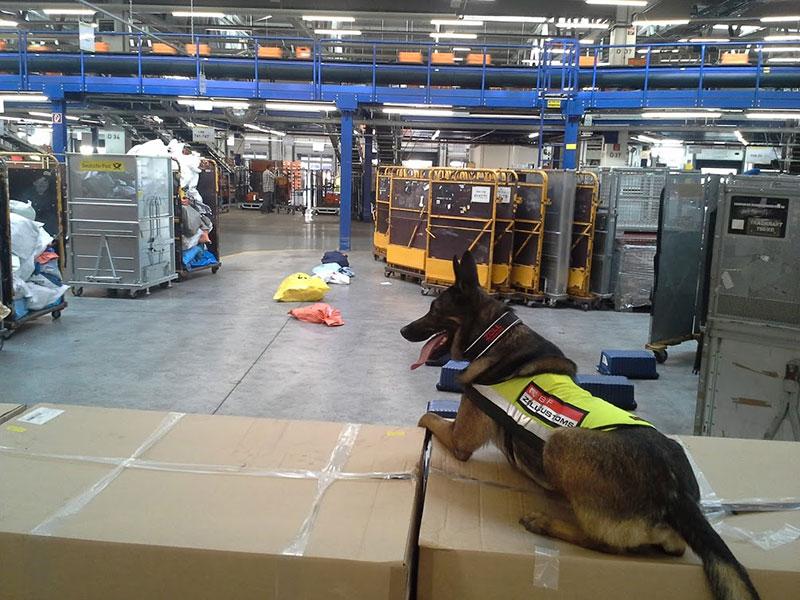 Diensthund vor Postverteilzentrum