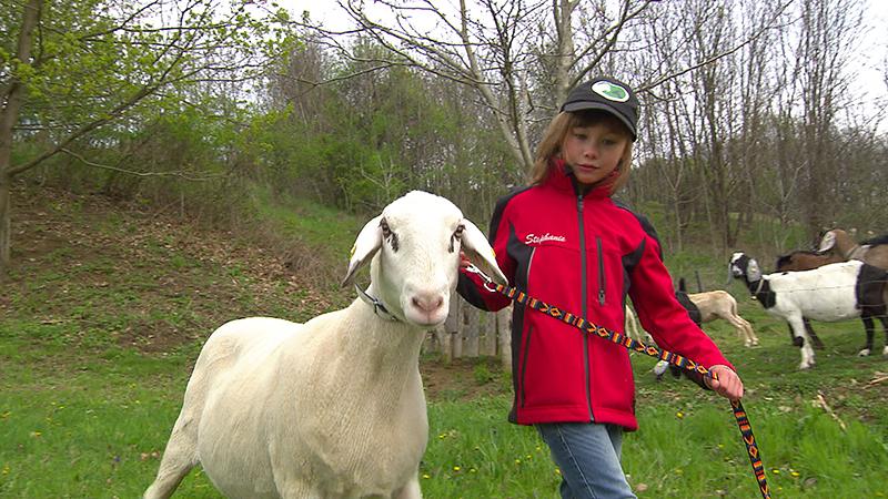 Neunjährige Schafzüchterin erfolgreich