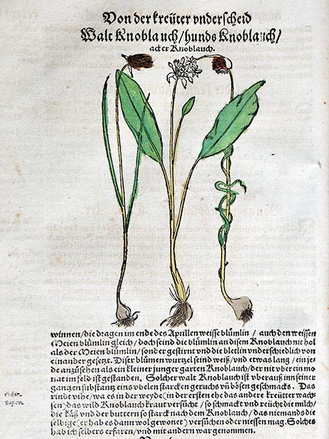 Alte Kräuterbücher Kräuterbuch