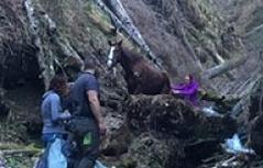 Kirchbach Rettung Pferd aus Graben Einetter