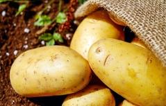 Kartoffeln in einem Sack