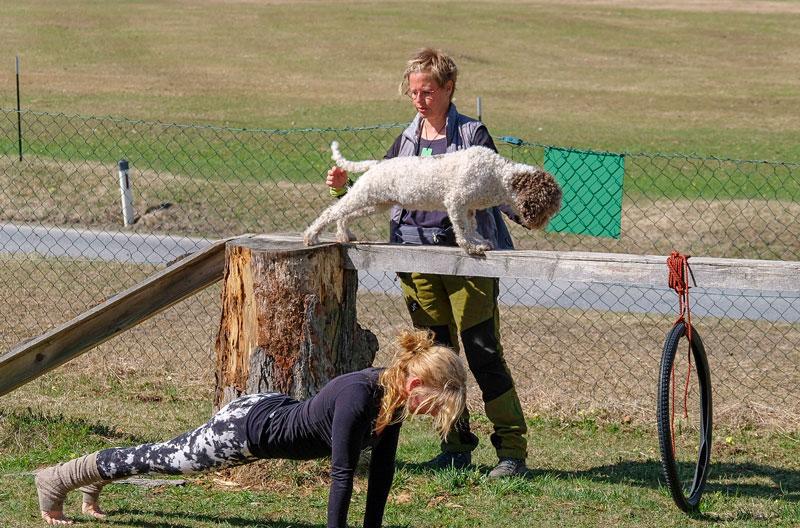 Streckübung auf dem Balken für den Hund, Frau macht es am Boden