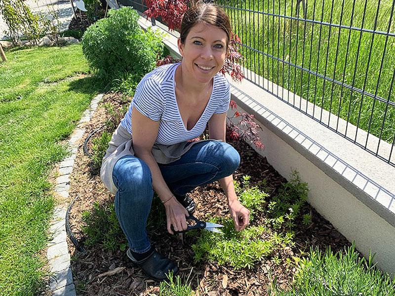 Pannacotta, Köchin pflückt Kräuter im Garten, Spargel und Kartoffeln in der Pfanne,