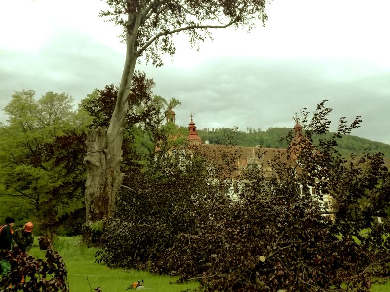 Die Baumkrone einer Blutbuche ist abgebrochen. Im Hintergrund, hinter den heruntergefallenen Ästen, ist das Schloss Eggenberg zu sehen.