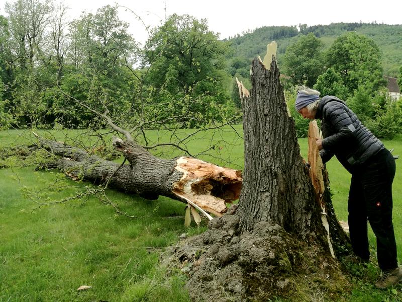 Eine Frau begutachtet den Stamm eines abgebrochenen Baumes. Die abgebrochene Baumspitze liegt am Boden.