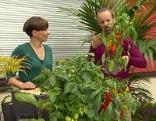 Gut gepflanzt Fruchtgemüse