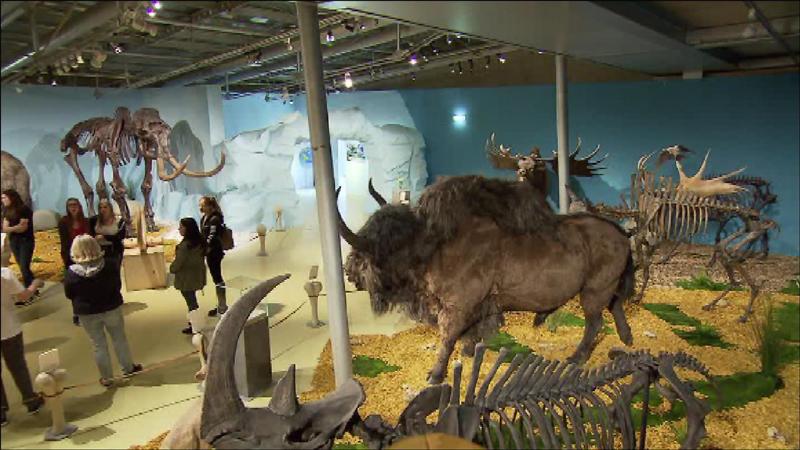 Der Ausstellungsraum mit Tierpräparaten, Skeletten und Höhle