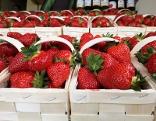 Erdbeeren in Körb, Erdbeerkönigin und Ladwirtschaftskammerpräsident bei der Pressekonferenz
