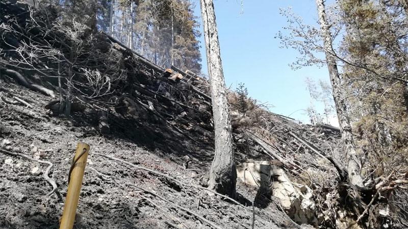 Waldbrand Zell